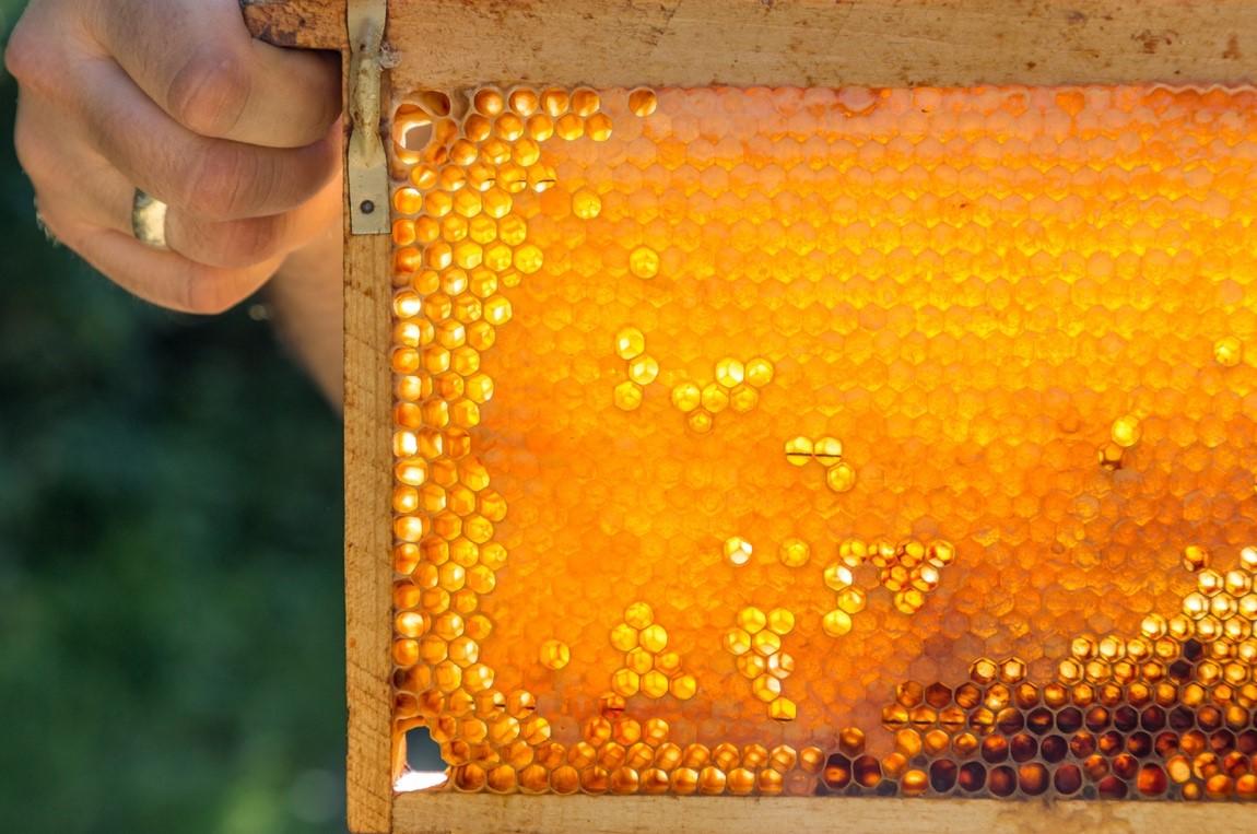 Honey Tree Meadery at the TN Honey Festival